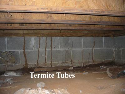 Termites And Hugelkultur Bugs Forum At Permies